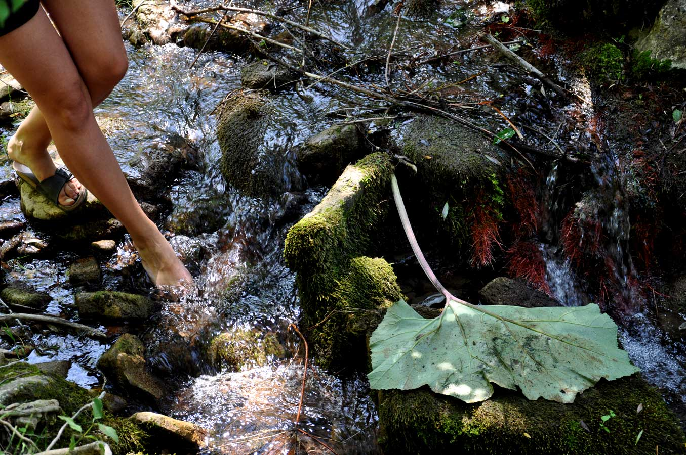 Riserva Cascate del Verde